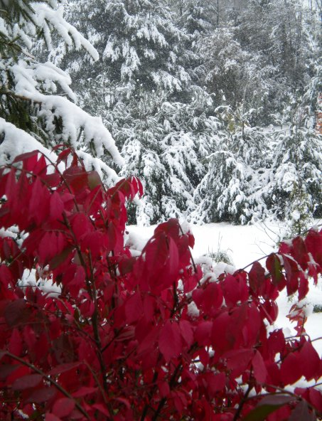 Fall and winter collide during October snow