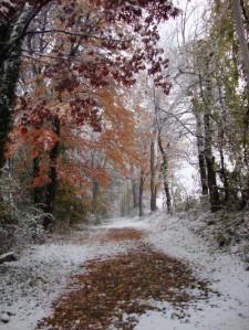 October snow scene